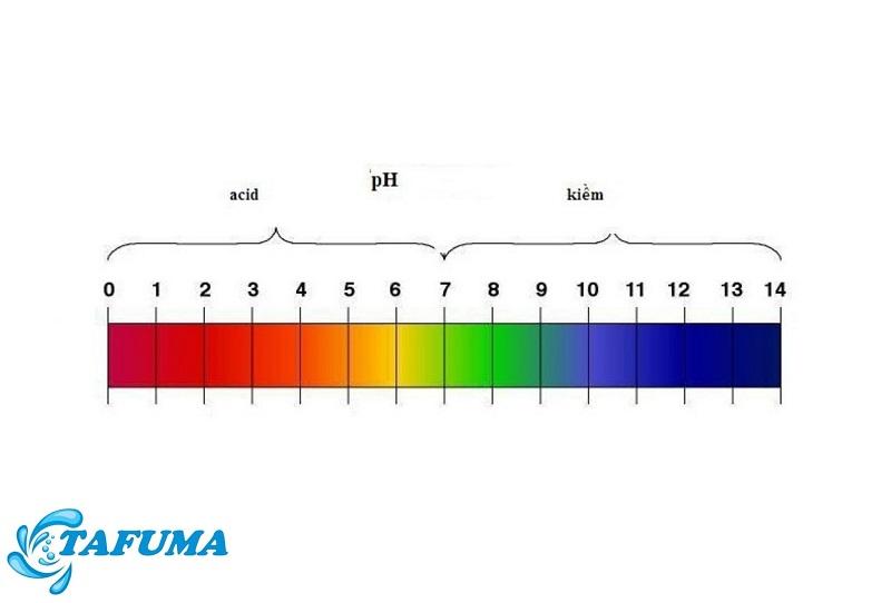 Thang đo quỳ tím là gì